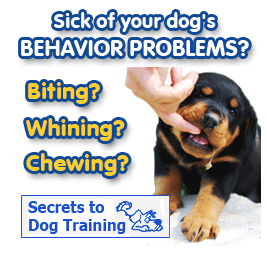Secrets to Dog Training - The Dog Obedience Training By Dan Stevens Reviews! Stop Dog Behavior Problems