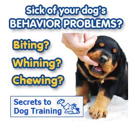 secrets-to-dog-training