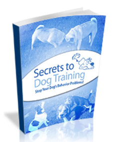 Dog Obedience Training By Dan Stevens